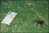 A spider approachs an airmail letter.  Photo by Peace Corps Volunteer Mary Akers.